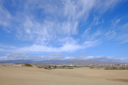 desert ecosystem: View on dunes of Maspalomas and natural reserve La Charca on the Canary Iceland Gran Canaria, Spain. Stock Photo