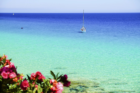 View on the ocean, white boat and pink tropical flowers on the Canary Island Fuerteventura, Spain.
