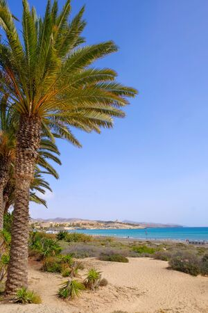 Vue sur la plage Costa Calma sur l'île des Canaries Fuerteventura, Espagne.
