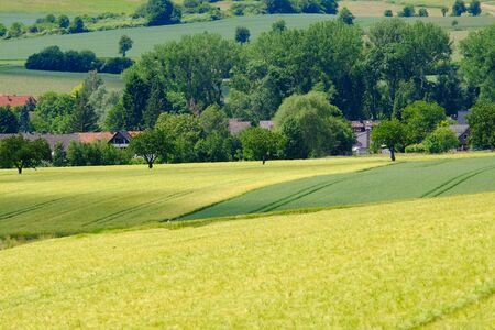 View on the agricultural fields with various types of grain in Bad Pyrmont, Germany. Фото со стока