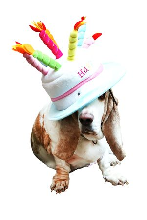 Happy Basset in the funny Hat  photo