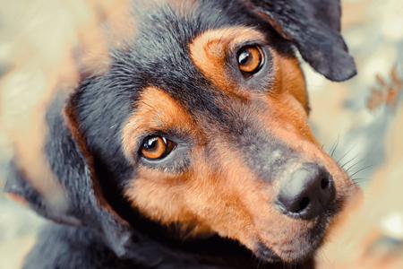 Stray dog close up Stock Photo
