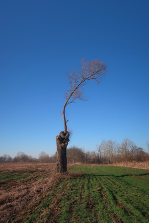 One spiteful tree in a field