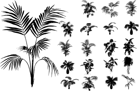Bamboo and other tropical plant Stock Vector - 3250930