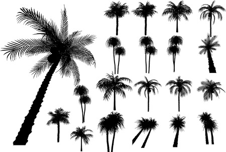20 vector tropical palms and trees