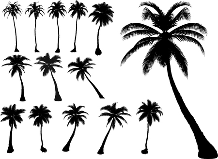 vector tropical palms and trees Illustration