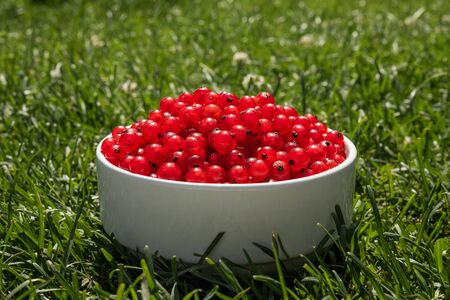 red currant berries on a white plate in green grass