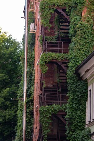 climbing plants on the fire metal stairs of a brick building