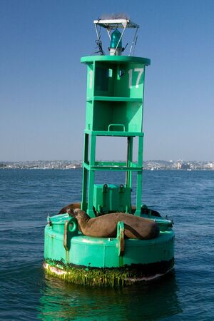 sunning: The sea lions are sunning themselves on a bouy in San Diego Bay.