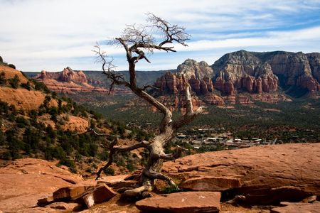 sedona: A bare tree overlooking the red rocks found in Sedona, Arizona Stock Photo