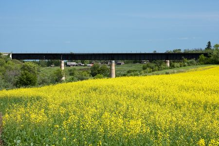 Railroad bridge beyond a bright yellow canola field. Stock Photo - 5374606