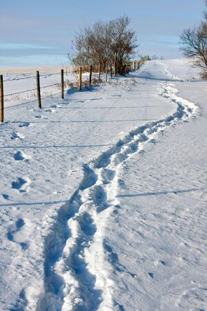foot path: A path of footsteps in the fresh white snow.