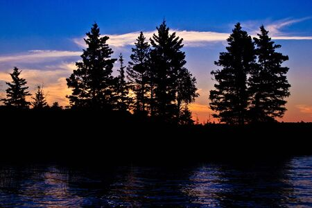 Spruce tree silhouettes in the warm glow of sunset. Stock Photo
