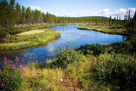 pine creek: Northern Canadian river and natural forest. Clean and untouched by man.