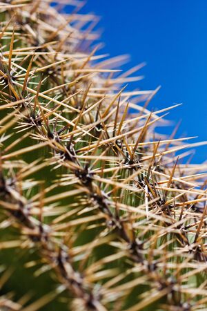 Detailed close up of the spikes and thorns of a green cactus. Stock Photo - 6978104