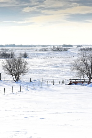 Snowy cold frosty winter prairie landscape