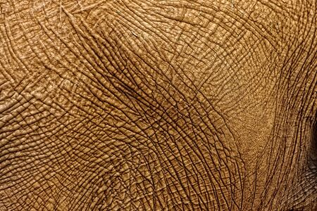 Texture of an elephants skin photo