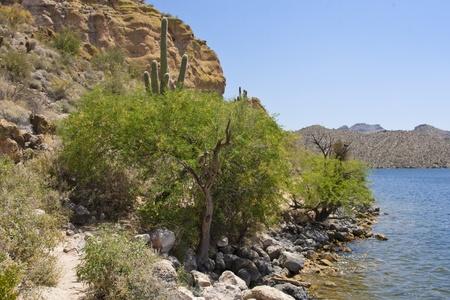 tonto national forest: Saguaro Lake is located within the Tonto National Forest just minutes from Mesa, Arizona.
