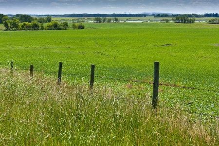 Wire fence along a green field on the open pasture photo