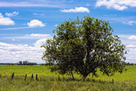 Large tree alone on the open green field Stock Photo - 12553327