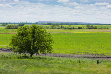 Large tree alone on the open green field Stock Photo - 12553328