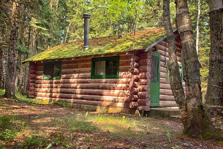 Old Log Cabin in the wooded forest of evergreen trees photo