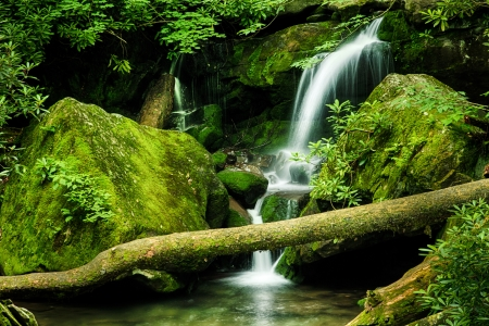 appalachian: Grotto Falls in Great Smoky Mountain National Park, Tennessee, USA