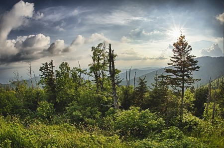 appalachian: On top of Clingmans Dome at the Great Smoky Mountains National Park Stock Photo