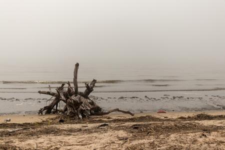 Driftwood on the beach Stockfoto