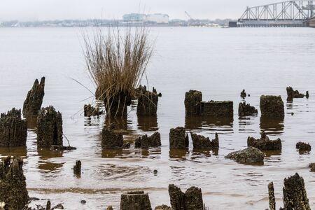 Old pilings on a shoreline Banco de Imagens