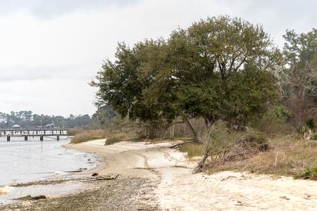 Shoreline with tree