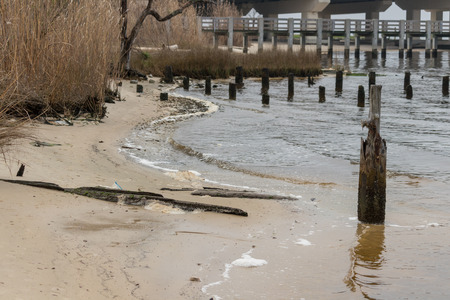 Bay shoreline with pilings