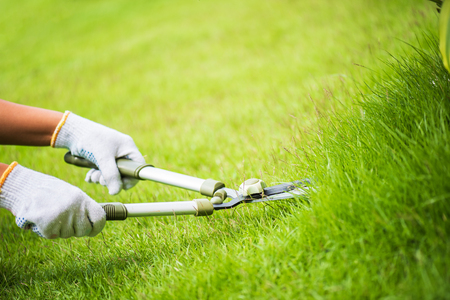 Hands holding the gardening scissors on green grass. Gardening concept background.