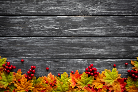 Top view of  Autumn maple leaves with red berries on old wooden backgound. Thanksgiving day concept.