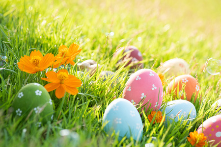 Happy easter!  Closeup Colorful Easter eggs in nest on green grass field during sunset background. Stockfoto