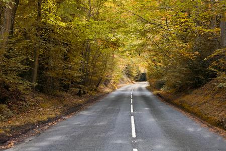road autumnal: Autumnal english road