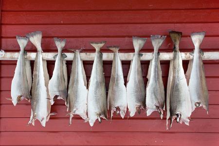 cod fish: Stockfish drying