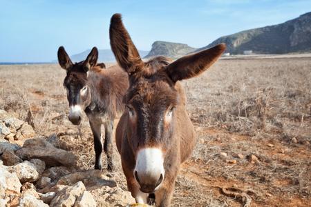 egadi: Curious donkeys