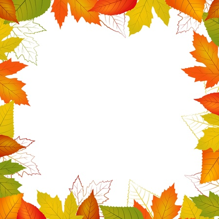 fall leaf: Fall vector leaf border illustration isolated from background