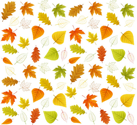 chokeberry: Autumn seamless vector leaf pattern isolated from background