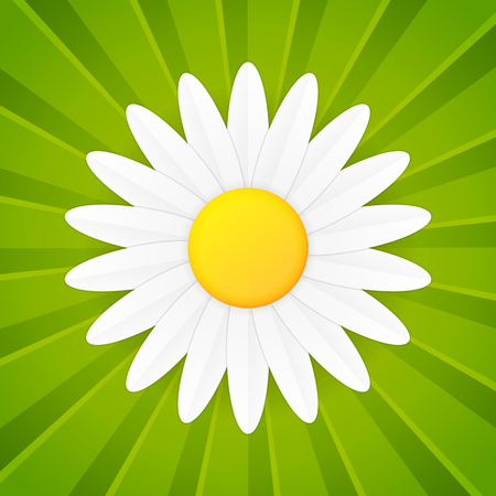 daisies: Spring flower daisy icon on green striped background Illustration
