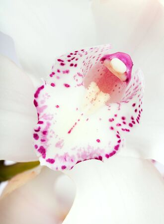 white orchid. close up Stock Photo - 6388800