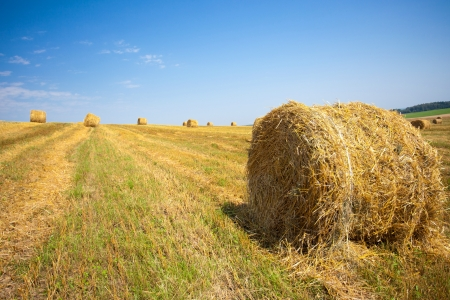 hayroll: harvested field with straw bales in summer