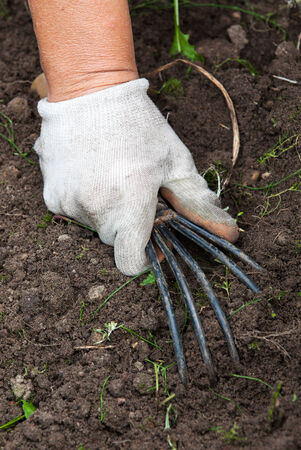 The hand holding the gardening tool photo