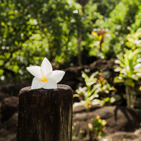 Tiare(white gardenia) is symbolic flower of French Polynesia