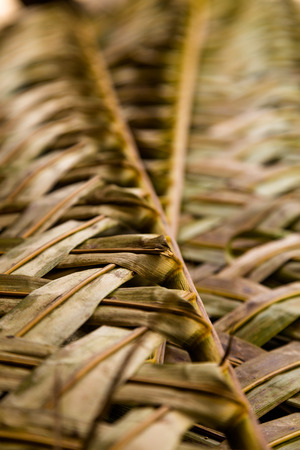 costruction: Abstract pattern of leaves used in costruction of traditional dwellings and as decoration.