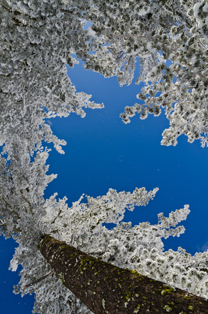 Winter trees and blue sky photo