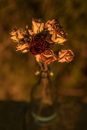 selfless: Fine art photograph of wheathered roses in the bottle Stock Photo