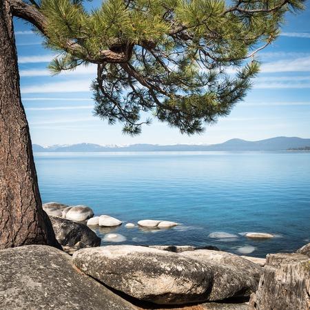 lake tahoe: Lake Tahoe seen through tree branches on the shore