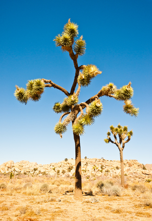 Bizarre landscape of Joshua Tree National Park in California Stock Photo